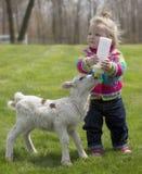 Милая маленькая девочка с овечкой стоковые фотографии rf