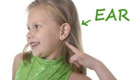 Милая маленькая девочка указывая ее ухо в частях тела уча английские слова на школу Стоковое фото RF