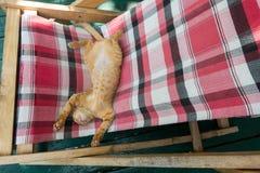 Милая маленькая игра кота/киски/котенка младенца на складывая кроватях Стоковое Фото