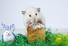 Милая маленькая крыса Стоковое Изображение