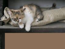 Милая маленькая рамка кота Стоковое фото RF