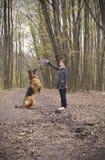 Милая молодая женщина играя с собакой немецкой овчарки Стоковые Изображения