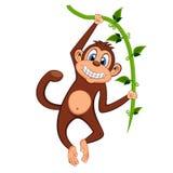 Милая обезьяна отбрасывая на шарже лоз Стоковое фото RF