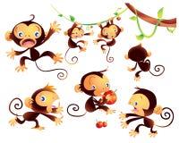 милая обезьяна Стоковое Изображение