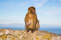 милая обезьяна Стоковые Фотографии RF