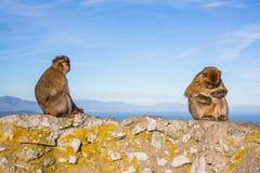 милая обезьяна Стоковая Фотография
