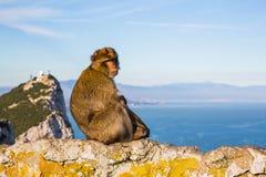милая обезьяна Стоковое Фото
