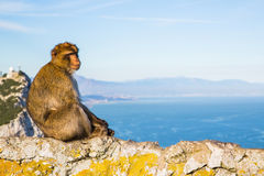 милая обезьяна Стоковые Изображения