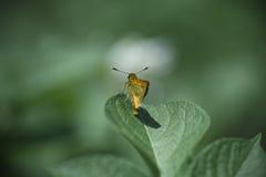 Милая оранжевая бабочка на лист на зеленой предпосылке Стоковые Изображения RF