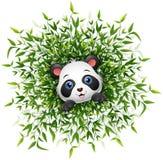 Милая панда младенца усмехаясь с сериями бамбуковой предпосылки белизны лист Стоковые Фото