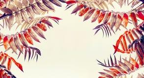 Милая рамка листьев осени на светлой предпосылке Стоковые Фото
