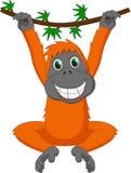 Милая смертная казнь через повешение шаржа орангутана Стоковое Изображение RF