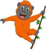 Милая смертная казнь через повешение шаржа орангутана Стоковые Изображения