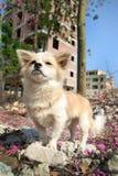 Милая собака в внешнем Стоковая Фотография