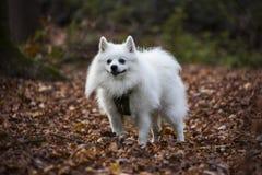 Милая собака в лесе Стоковое фото RF