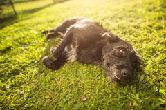 Милая собака лежа в траве Стоковое фото RF
