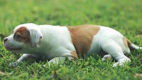 Милая собака есть траву вне на красивый день видеоматериал