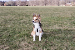 Милая собака ждет команды стоковое фото
