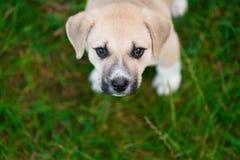 милая собака немногая Стоковое Фото