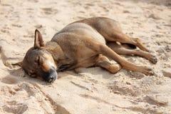 Милая собака спать на пляже Стоковые Изображения RF