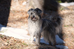 Милая собака стоя в тени Стоковое Изображение RF