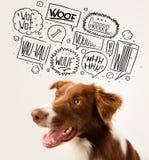Милая собака с пузырями лаять Стоковые Изображения