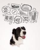 Милая собака с пузырями лаять Стоковая Фотография RF