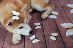 Милая собака с Deco Butterflys Стоковое Изображение