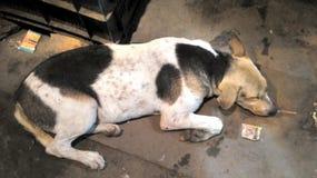 Милая собака улицы Стоковые Изображения