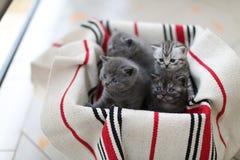 Милая сторона, заново принесенные котята стоковые фотографии rf