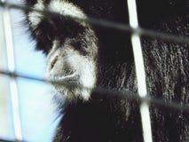 Милая сторона обезьяны Стоковая Фотография RF