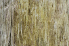 Милая сделанная по образцу поверхность ископаемого Стоковая Фотография