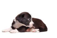 Милая тоскливость щенка Стоковая Фотография RF