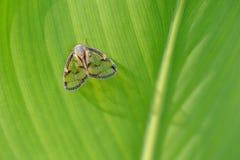 Милая цикада Стоковые Фото