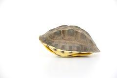 Милая черепаха Стоковые Фотографии RF