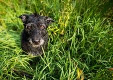 Милая черная собака внешняя Стоковые Фото