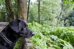 Милая черная собака в лесе Стоковое Изображение