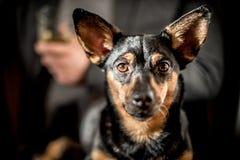 Милая черная собака Стоковая Фотография RF