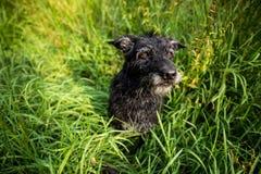 Милая черная собака Стоковая Фотография