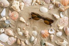 Мидии в песке Стоковые Фото