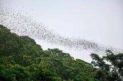 100 миллионов летучие мыши летая ночной искать для еды в evenin Стоковые Фото