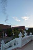 100 миллионов летучие мыши на Wat Khao Chong Pran, Ratchaburi Таиланде Стоковое фото RF