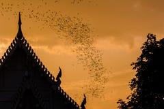 Миллион летучих мышей на Таиланде Стоковые Фотографии RF