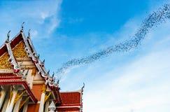 Миллион летучих мышей на Таиланде Стоковое фото RF