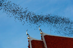 Миллион летучих мышей на Таиланде Стоковые Изображения RF