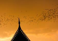 Миллион летучих мышей на Таиланде Стоковая Фотография