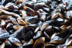 Мидия продукта моря Стоковое Фото