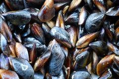 Мидия продукта моря Стоковые Фотографии RF
