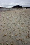 Мили песчанных дюн Стоковые Изображения