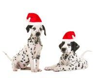 Милое далматинское ` s щенка нося шляпу ` s santa стоковые изображения
